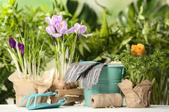 Blooming flowers and gardening equipment on table. Outdoors stock photo