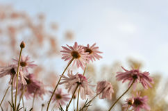 Blooming flowers Royalty Free Stock Images
