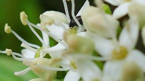 Blooming flowers macro motion - 4K stock video