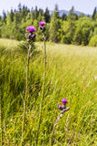 Blooming flowers on mire Stock Photography
