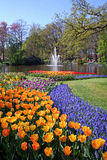 Blooming flowers in park. Scenic view of blooming flowerbeds in park with lake and fountain in background Stock Photos