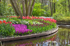 Blooming flowers in a park with a pond Stock Photos