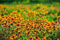 Blooming flowers scenery Royalty Free Stock Photography