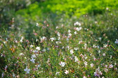 The blooming flowers. In spring,flowers are blooming all over the field.It makes viewers feeling happy royalty free stock photos