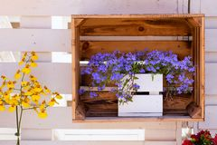 Blooming flowers in stylish boxes. View of the Blooming flowers in stylish boxes royalty free stock images
