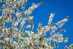 Blooming flowers in sunny day Stock Photography