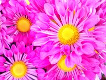 Blooming. Flowers supper powerful Stock Image