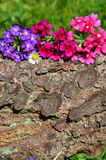 Blooming flowers and tree bark stock photography
