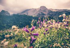 Blooming flowers valley with rocky Fisht Mountains Landscape Stock Images