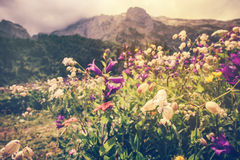 Blooming flowers valley with rocky Fisht Mountains Landscape Stock Photos