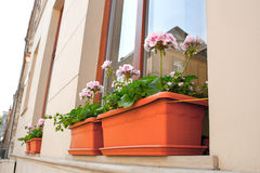 Blooming flowers on the windowsill at home Stock Image