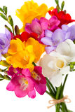 Blooming Freesia Royalty Free Stock Photos