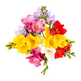 Blooming Freesia. Royalty Free Stock Photo