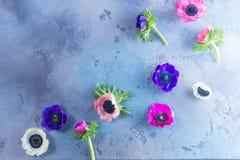 Anemones flowers on stone background Stock Photo