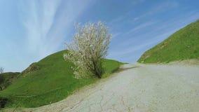 Blooming fruit tree stock video