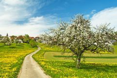Blooming fruit tree with village Royalty Free Stock Photos