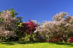 Blooming fruit trees in spring park stock photo