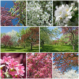 Blooming garden in spring Stock Photos