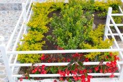 Blooming garden under the window stock image