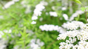 Blooming garden stock footage