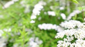 Blooming garden stock footage