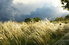 Free Blooming Grass Field A Feather Grass And A Stormy Sky In Spring. Stock Photo - 147595750