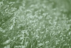 Blooming grass. Monochrome photo. Royalty Free Stock Photos