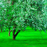 Blooming green Beautiful park garden Stock Photo
