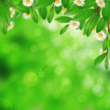 Blooming green leaves and flowers Royalty Free Stock Images