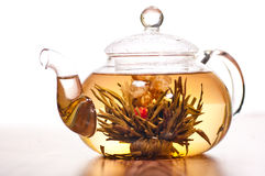 Blooming green tea in glass teapot Royalty Free Stock Image