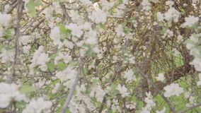 Blooming green trees in the park. Beautiful nature. Slow motion.  stock video footage