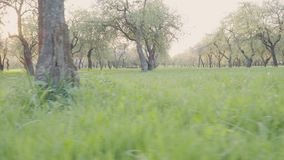 Blooming green trees in the park. Beautiful nature. Slow motion.  stock video