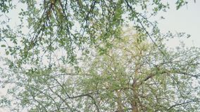 Blooming green trees in the park. Beautiful nature. Slow motion.  stock footage