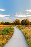Blooming heathland with bicycle trail at the Dutch Veluwe Stock Images
