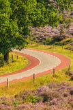Blooming heathland with road at the Dutch Veluwe national park Stock Photo