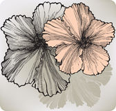 Blooming hibiscus flower, hand-drawing. Vector illustration. Royalty Free Stock Photography