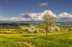 Blooming hillside. Above the valley on May Day Royalty Free Stock Photo