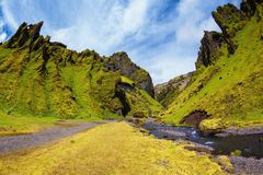 The blooming Iceland royalty free stock image