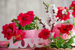 Blooming interior decoration Stock Images