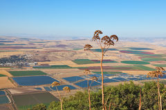 Blooming Isreel Valley in Israel Royalty Free Stock Images