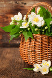 Blooming jasmine in a basket Royalty Free Stock Photography