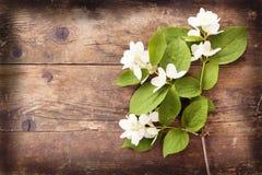 Blooming Jasmine wicker, wood background. royalty free stock photo