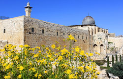 Blooming Jerusalem, Israel Royalty Free Stock Image