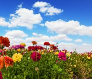 Blooming kibbutz field stock photo