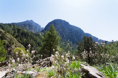 Blooming landscape of the Samaria Gorge Royalty Free Stock Photo