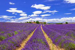 blooming lavander in Provance, France Royalty Free Stock Photos