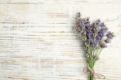 Blooming lavender flowers stock image