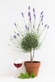Blooming lavender at Provence interior. Royalty Free Stock Photo