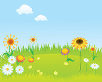 Blooming lawn background Royalty Free Stock Photos