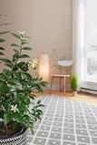 Blooming lemon tree in a room with modern decor Royalty Free Stock Photo
